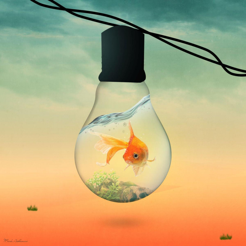 Lighted Fish