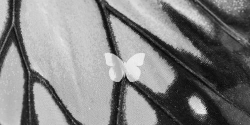 Minimalism Butterfly