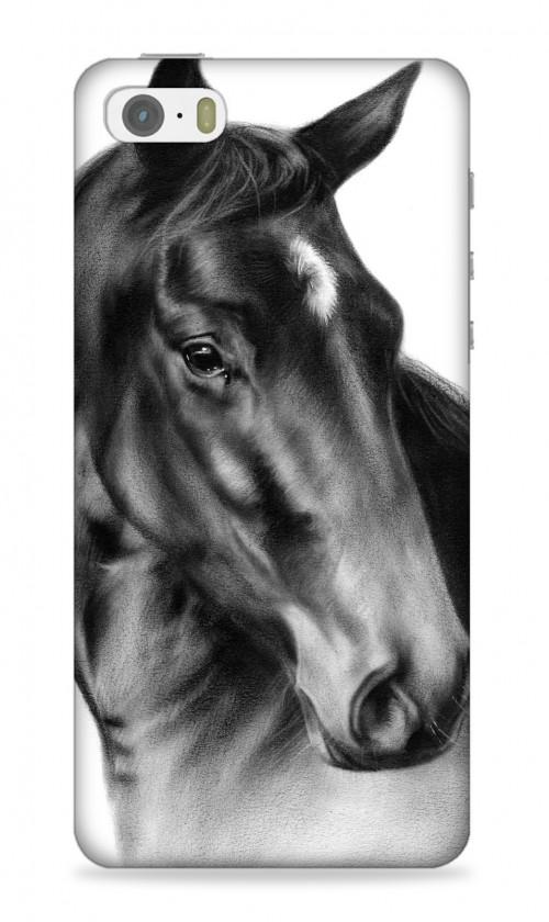 Horse Peter Pan